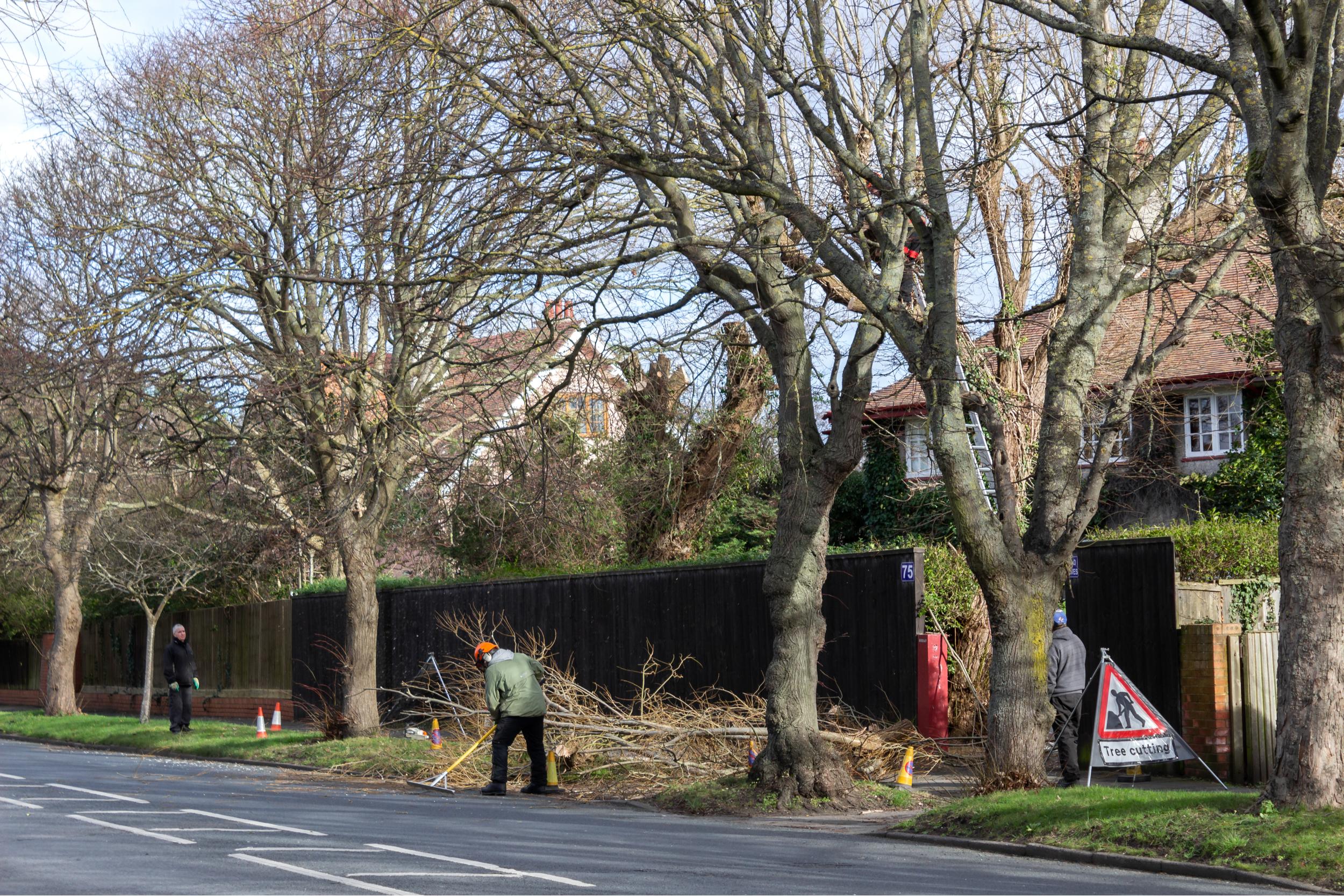 tree-surgeons-in-tunbridge-wells